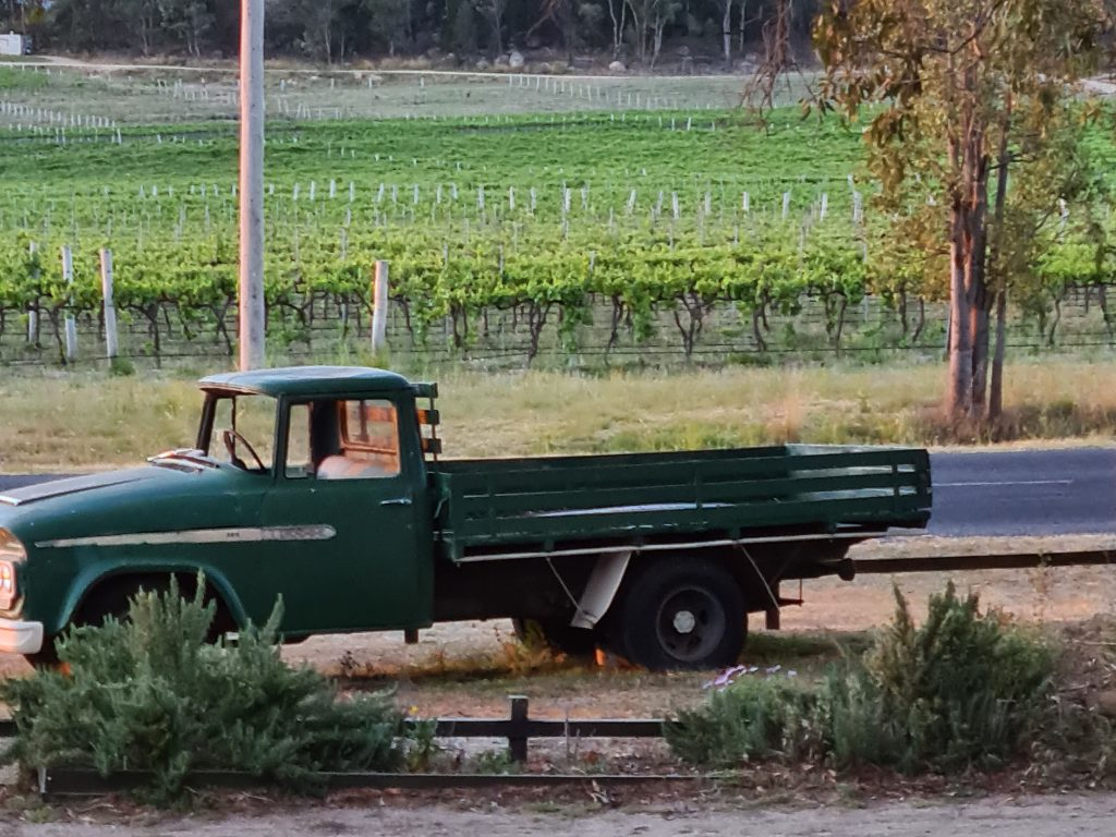 Dodge with vineyard in background
